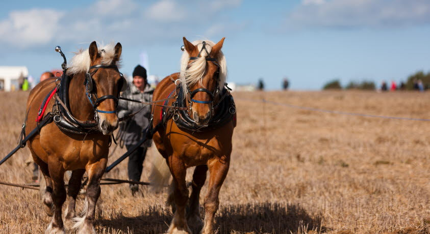 Memorial Ploughing Match Isle of Wight