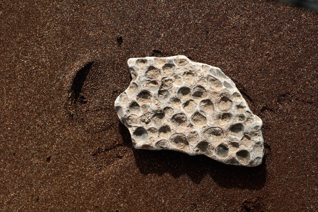 Fossil on the sand