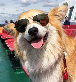 Dog traveling with Red Funnel