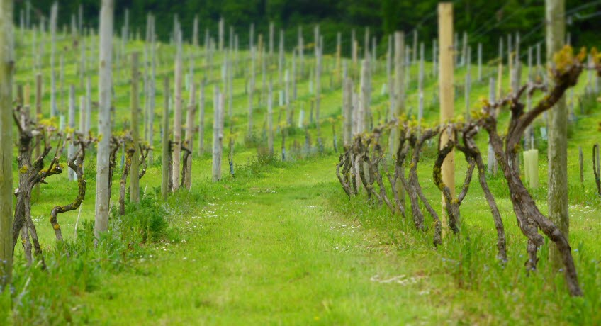 Adgestone Vineyard Sandown Isle of Wight