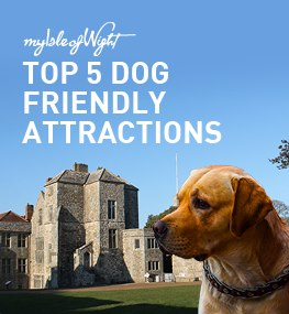 Top 5 Dog Friendly Attractions