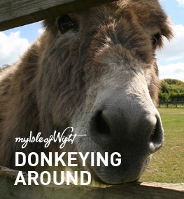 Donkeying Around