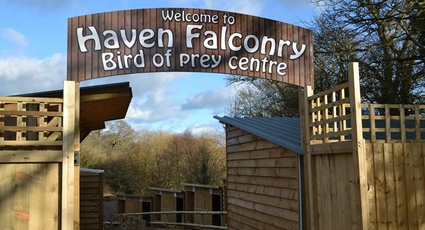 Haven Falconry, IW Steam Railway, Havenstreet, Isle of Wight, PO33 4DS