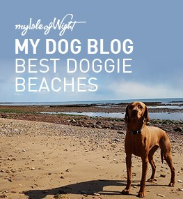 Best Doggie Beaches