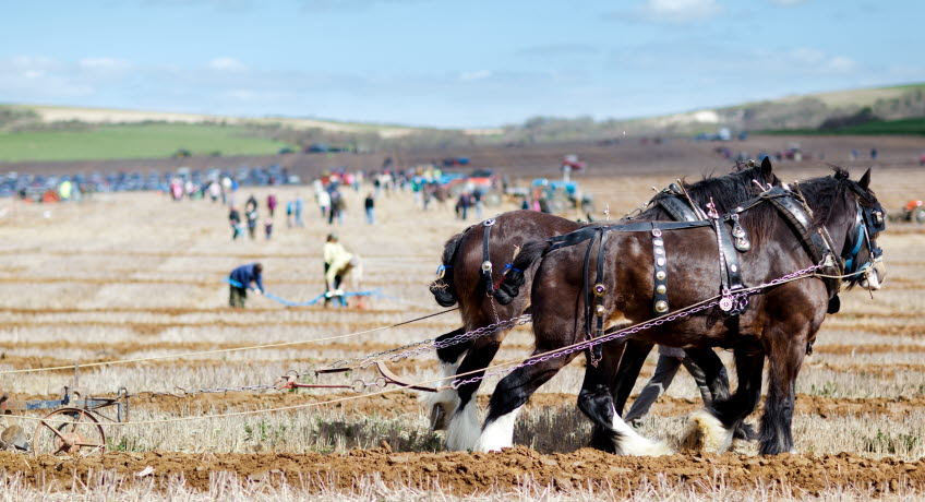 Memorial Ploughing Match Heavy Horses