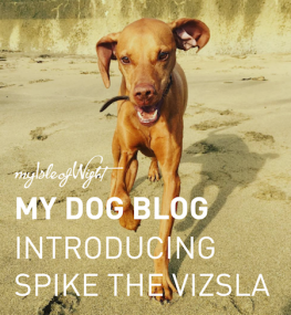 1st Dog Blog