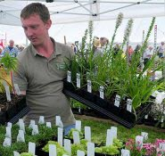 Setting out plant stall Wolverton Manor Garden Fair